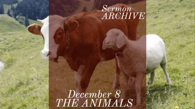 The Animals Sermon at First Church, Sarasota Florida